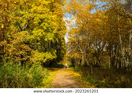Beautiful Autumn Landscape With Walking Man On Walkway In Sunny Day In Park. Royalty-Free Stock Photo #2023265201
