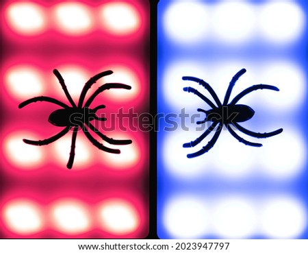 Cartoon Halloween background black spiders on blue and red bokeh backdrop. Flat lay style. Halloween abstract background. Copy space.