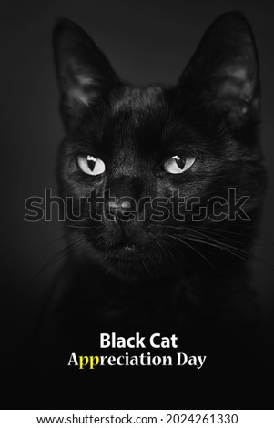 Black Cat Appreciation Day for social media post,day. Poster Image of Black Cat Appreciation Day. Black background. Black cat with white eyes closeup picture. Innocent Cat.  August 17.