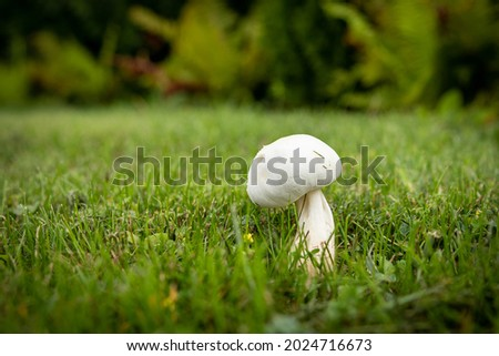 Close up landscape photography of Latvia fauna and flora with white wild mushroom in green backyard lawn. Royalty-Free Stock Photo #2024716673
