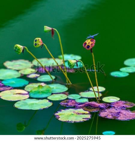 Beautiful painting of Zen lotus pictures