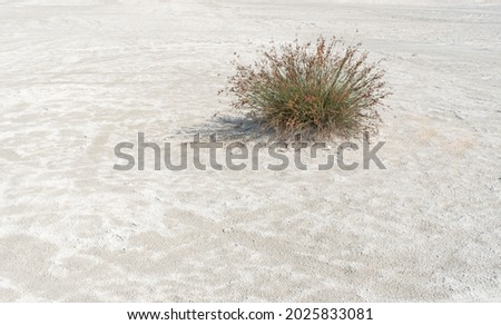 dry climate plants growing in arid environment,  Royalty-Free Stock Photo #2025833081