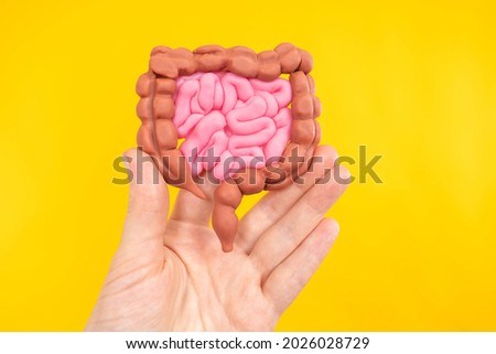 Intestinal tract. Intestinal tract model on yellow background. Miniature yellow-red intestinal tract. It symbolizes the digestive system of organs. Concept - study of digestive system. Royalty-Free Stock Photo #2026028729