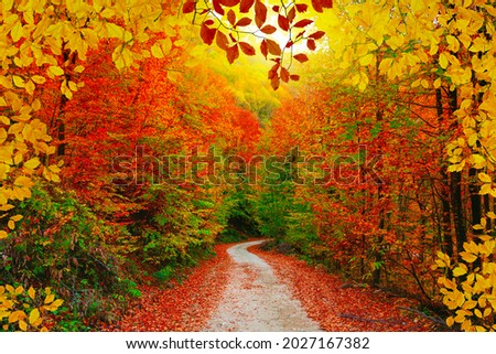 Colorful trees and footpath road in autumn landscape in deep forest. The autumn colors in the forest create a magnificent view. autumn view in nature. Domanic, Bursa, Turkey Royalty-Free Stock Photo #2027167382