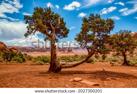A sprawling tree in the desert. Red canyon desert tree. Tree in desert canyon Royalty-Free Stock Photo #2027300201
