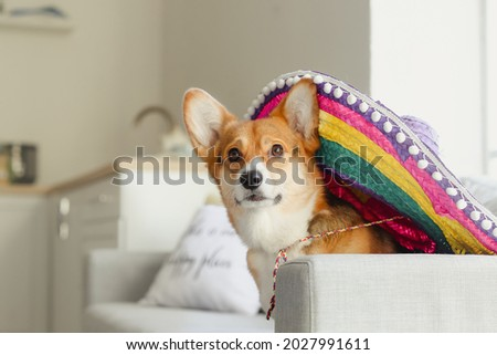 Cute dog with sombrero at home Royalty-Free Stock Photo #2027991611