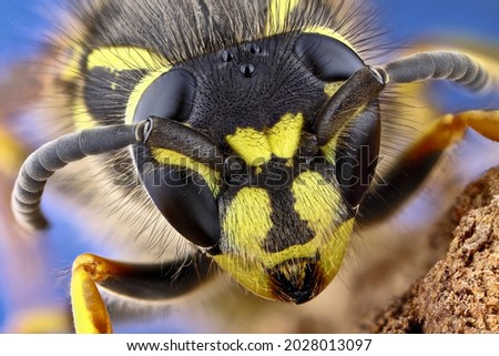 Super macro portrait of a wasp on a black background. Full-face macro photography. Large depth of field and a lot of details of the insect. Royalty-Free Stock Photo #2028013097