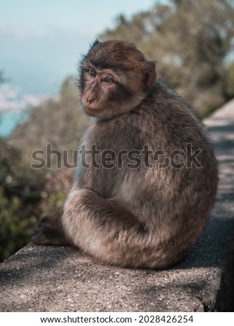 It was a picture shooted in Gibraltar. Beautiful monkeys.
