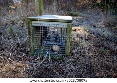 Traps set to capture predators like stoats and rats, are baited with chicken eggs and then the spring is set, Canterbury, New Zealand Royalty-Free Stock Photo #2028738095