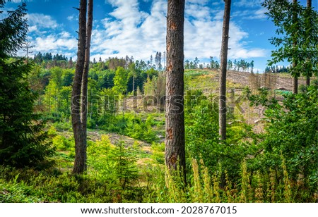On the outskirts of a pine forest. Pine trees. Pine forest scene. Pinewood landscape Royalty-Free Stock Photo #2028767015