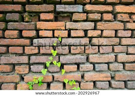 old brick art and leaf color green #202926967