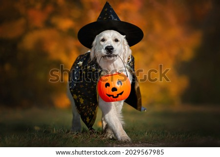 dog in halloween costume walking  outdoors Royalty-Free Stock Photo #2029567985