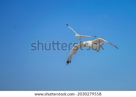 Two seagulls are flying against the blue sky. Seabirds gracefully spoil in the air. Royalty-Free Stock Photo #2030279558