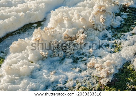 metaphiton a community of organisms, algae, bacteria, detritus, invertebrates and fungi. Converted components to foam. Formation processes in the seas and reservoirs Royalty-Free Stock Photo #2030333318