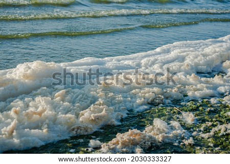 metaphiton a community of organisms, algae, bacteria, detritus, invertebrates and fungi. Converted components to foam. Formation processes in the seas and reservoirs Royalty-Free Stock Photo #2030333327