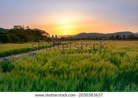 Sunrise view of barley field with stone flagpole supports at Hwangnyongsa Temple Site of Hwangnyongsa History and Culture Hall near Gyeongju-si, South Korea   Royalty-Free Stock Photo #2030383637
