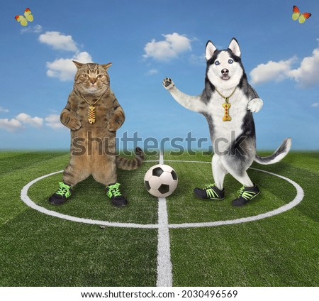 A beige cat with a dog husky play soccer in the stadium.