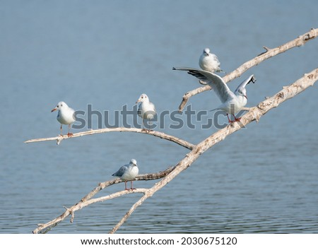 many kittiwakes perched on tree branches on a wetland lake, some flapping their wings. A multitude of waterfowl Royalty-Free Stock Photo #2030675120