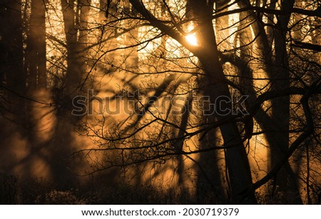Sunlight through the crowns of trees in the forest. Forest sunbeams. Sunset shadows sunlight. Sunbeam forest scene Royalty-Free Stock Photo #2030719379