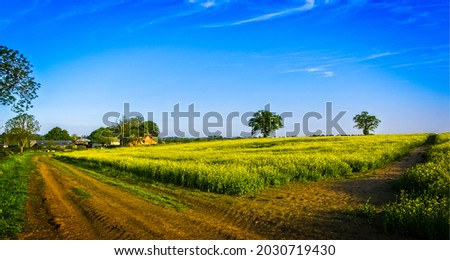Rural road through a field in summer. Panorama of rural field road. Rural field road panoramic landscape. Village road panorama Royalty-Free Stock Photo #2030719430