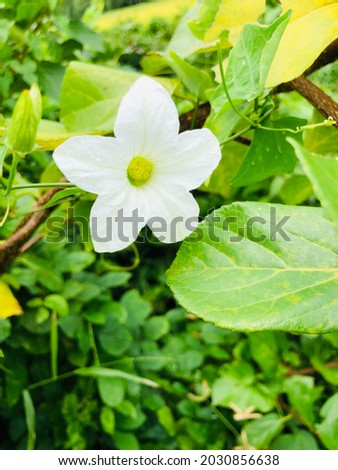 Very simple wild flower will make your day Royalty-Free Stock Photo #2030856638