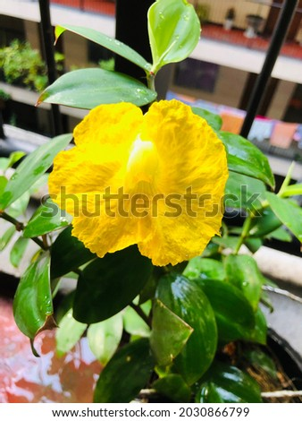 A very beautiful flower in my collection Royalty-Free Stock Photo #2030866799