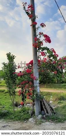 flower landscape high res stock image