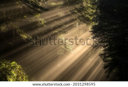 Sunlight through the crowns of trees in a dark forest. Forest sunbeams. Sunrays in dark forest. Forest sunlight shadows Royalty-Free Stock Photo #2031298595
