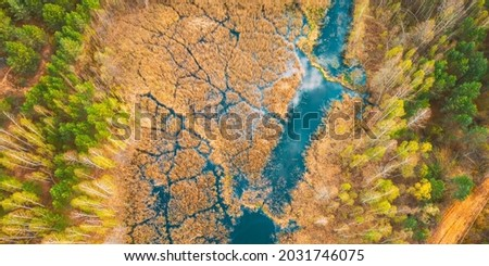 Spring Season. Aerial View. Young Birches Grow Among Small Marsh Bog Swamp River. Deciduous Trees With Young Foliage Leaves In Landscape In Early Spring. Royalty-Free Stock Photo #2031746075