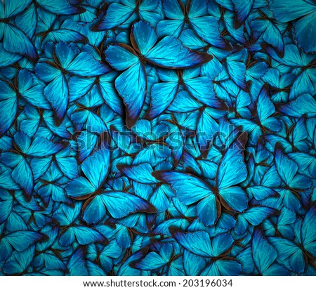 beautiful background with lot of different butterflys