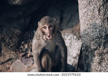 A cute picture of a monkey making a weird face. Image is edited.
