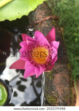 A Picture of a beautiful pink lotus flower in a pond in the garden