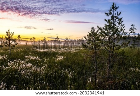 Misty dawn over the field. Early morning fog at nature dawn. Nature at dawn. Sunrise early morning outdoors Royalty-Free Stock Photo #2032341941