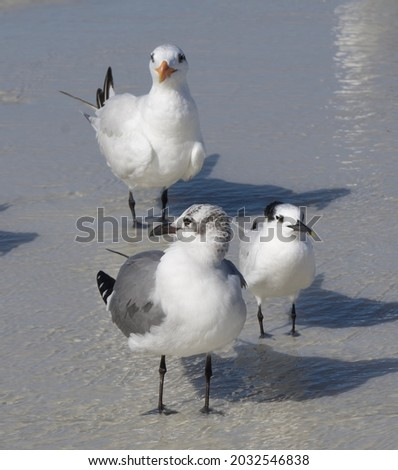 Three seabirds in the surf at the beach Royalty-Free Stock Photo #2032546838