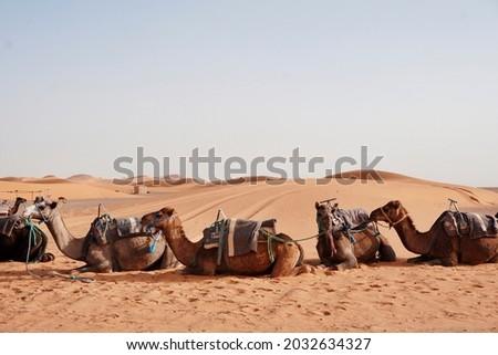 Camel rides at Erg Chebbi, Morocco Royalty-Free Stock Photo #2032634327