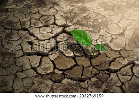 Broken soil in arid areas, with trees growing in arid areas, global warming. Royalty-Free Stock Photo #2032769159