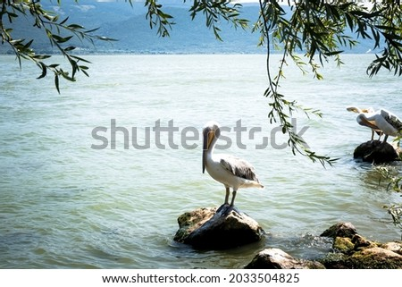 Pelican standing on stone in lake. Forest, lake and pelican. The white pelican is waiting on the stone in the lake. Selective focus. Royalty-Free Stock Photo #2033504825