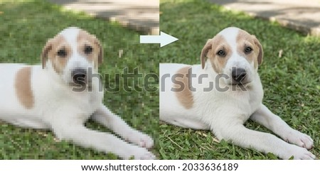 Example of AI Photo upscaling technology - A pixelated picture of a puppy on the left, and the the enhanced version on the right.