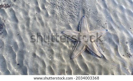 Starfish (sea star) moving on sand beach, animal of the ocean, echinoderms Royalty-Free Stock Photo #2034003368