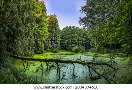 A forest swamp in the wilderness. Swamp in forest. A swamp with a quagmire in the forest. Forest swamp view Royalty-Free Stock Photo #2034394610