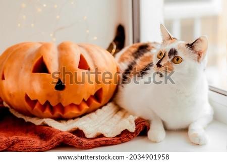 Cat with pumpkin. Halloween holiday.