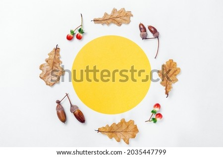 Autumn minimal composition. Wreath of acorns, golden oak leaves and red berries on white background. Yellow circle shape frame mockup for text. Autumn design element. Flat lay, top view, copy space Royalty-Free Stock Photo #2035447799