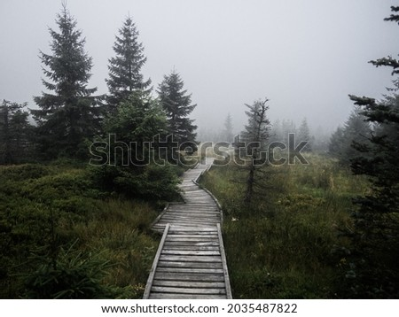 Moody wood path in the scary atmospheric forest surrounded by fog in every step deep in National park Jizera mountains, Czech Republic. Royalty-Free Stock Photo #2035487822