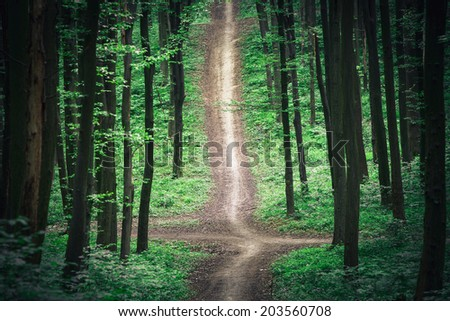 beautiful green forest #203560708