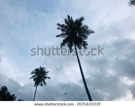 Coconut trees with white sky Royalty-Free Stock Photo #2035610339
