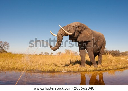 Elephant Royalty-Free Stock Photo #203562340