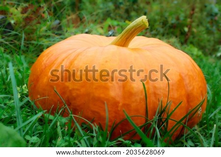 Ripe ginger pumpkin isolated on a burred unfocussed grass background. Autumn concept with pumpkin. High quality photo Royalty-Free Stock Photo #2035628069