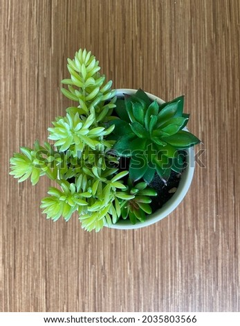 Artificial plant in white vase at woody table, view from top - woody background Royalty-Free Stock Photo #2035803566