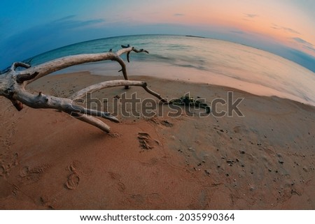 Оld wood snag on tropical beach at beautiful sunset. Fisheye look. Nature background. Nai Yang beach. Phuket. Thailand Royalty-Free Stock Photo #2035990364