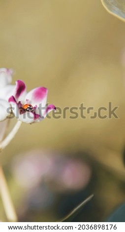 Magnolia Flower High Res Stock Image